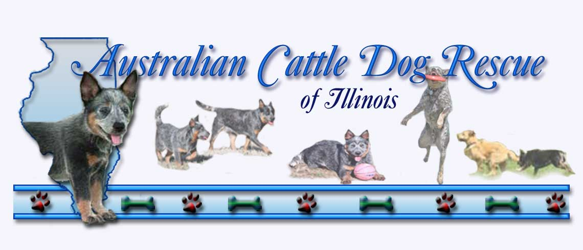 Australian Cattle Dog Rescue of Illinois Adoption Heelers